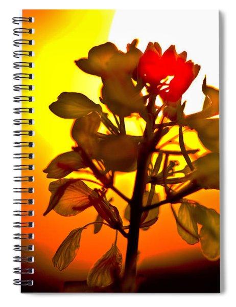 Mustard Sunset Spiral Notebook