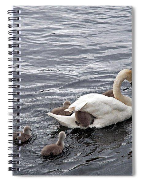 Mute Swans Spiral Notebook