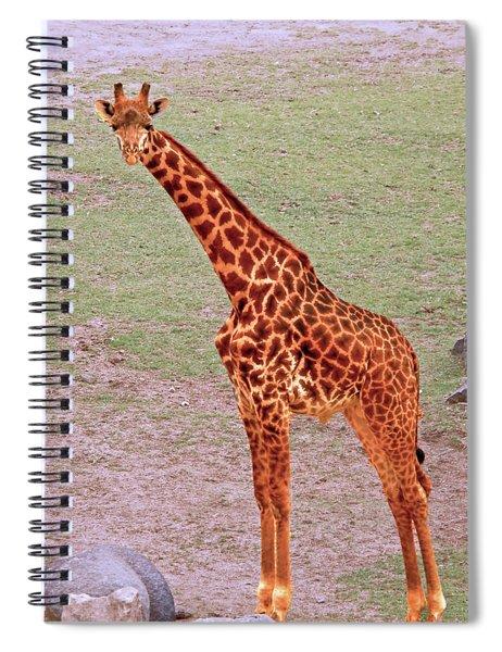 My Giraffe Spiral Notebook