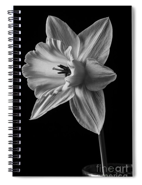 Narcissus Flower Spiral Notebook