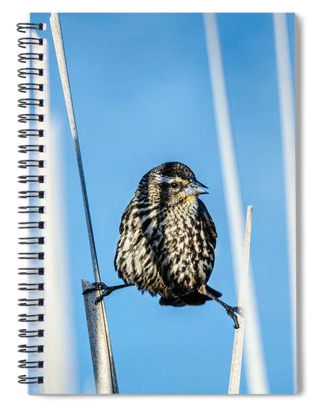 Nature's Circus Spiral Notebook