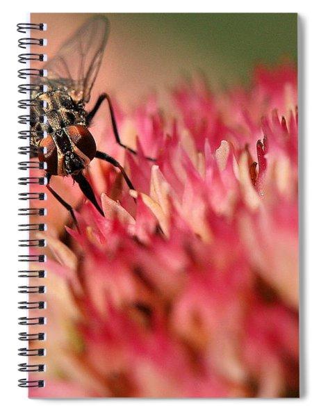 Nectar Hunt Spiral Notebook