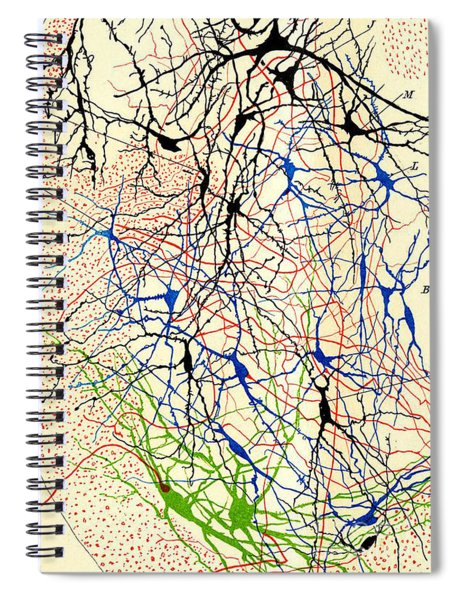 Nerve Cells Santiago Ramon Y Cajal Spiral Notebook