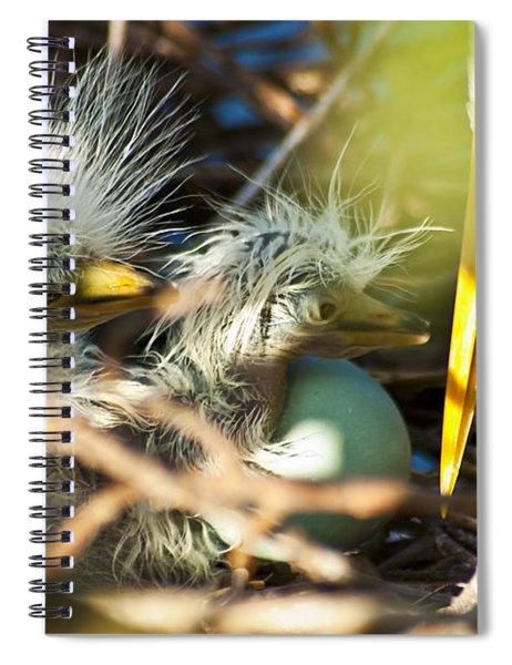 New Arrivals Spiral Notebook