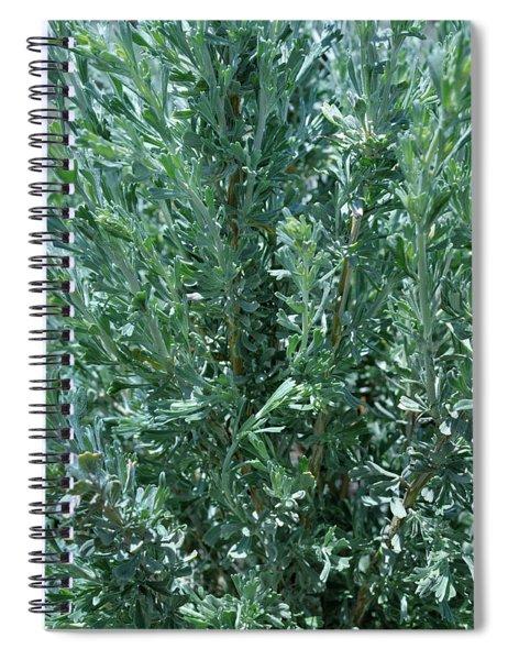 New Sage Spiral Notebook