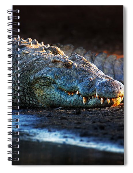 Nile Crocodile On Riverbank-1 Spiral Notebook