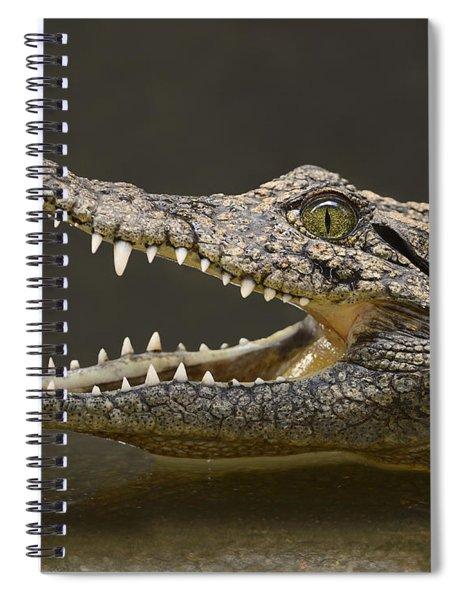 Nile Crocodile Spiral Notebook
