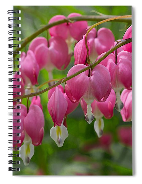 Spiral Notebook featuring the photograph Bleeding Heart by Patti Deters