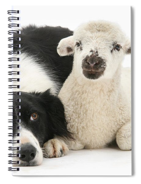 No Sheep Jokes, Please Spiral Notebook