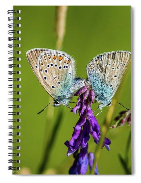 Northern Blue's Mating Spiral Notebook