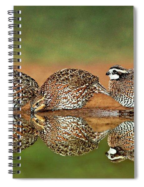 Northern Bobwhites Birds Colinus Virginianus Wild Hida Spiral Notebook