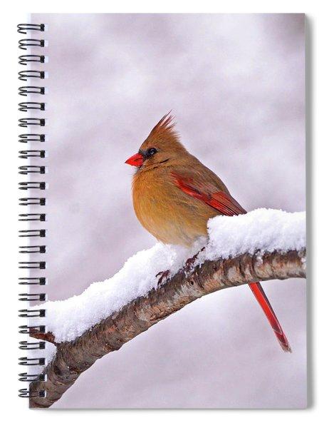 Northern Cardinal In Winter Spiral Notebook