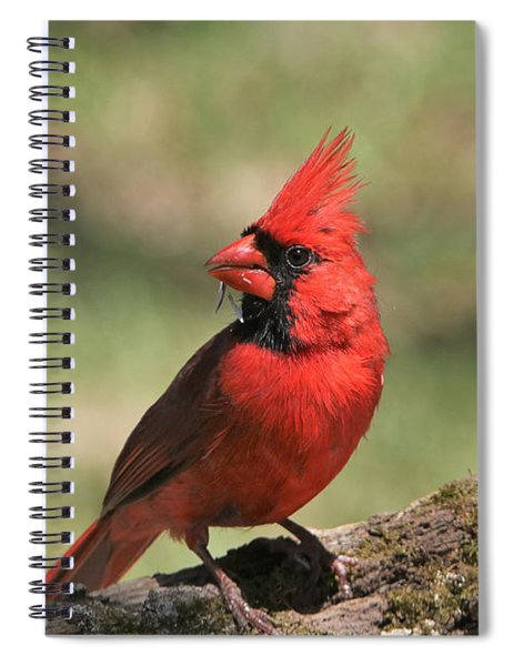 Northern Cardinal Portrait Spiral Notebook