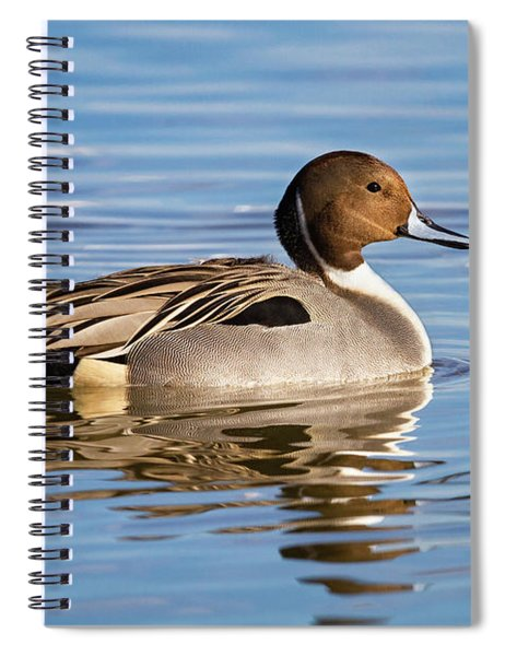 Northern Pintail Duck Spiral Notebook