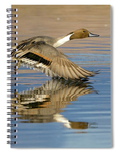 Northern Pintail With Reflection Spiral Notebook