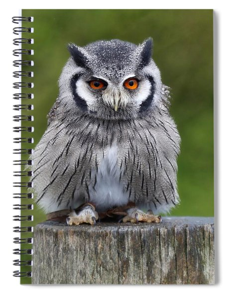 Northern White Faced Owl Spiral Notebook