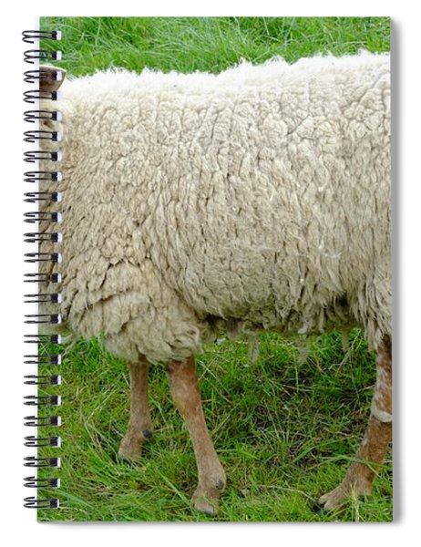 Unshaven Spiral Notebook