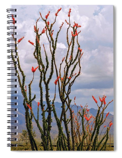 Ocotillo Blooming Under Cloudy Skies Spiral Notebook