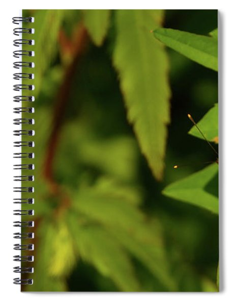 Offset Image Of A Brown Butterfly Spiral Notebook