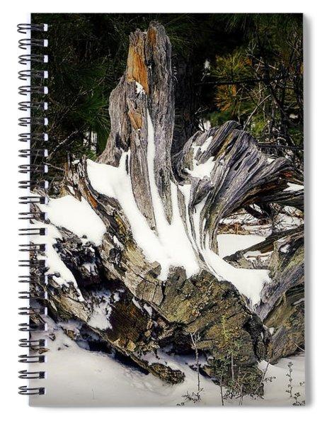 Old Logs Spiral Notebook