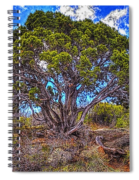 Old Utah Juniper Spiral Notebook