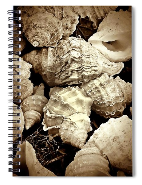 On The Beach - Shells In Sepia Spiral Notebook