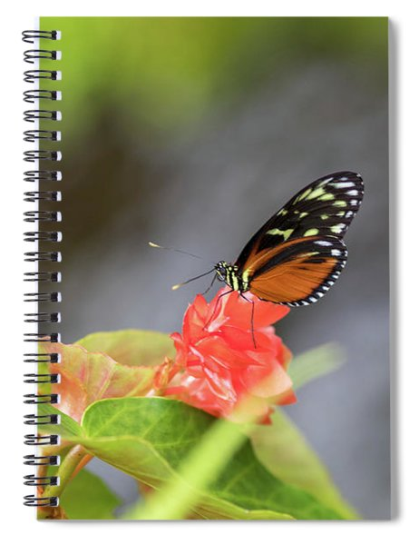 Orange And Black Butterfly Spiral Notebook