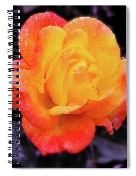 Orange And Violet Rose Spiral Notebook