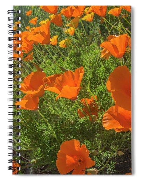 Orange Burst Spiral Notebook