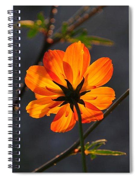 Orange Cosmo Spiral Notebook