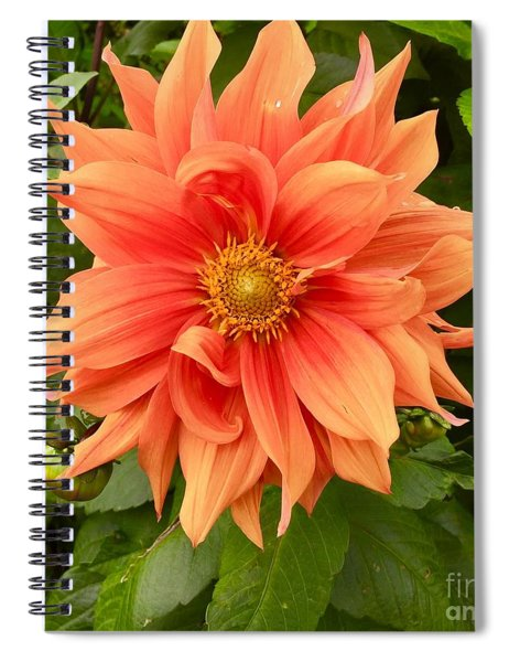 Orange Delight Spiral Notebook
