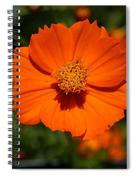 Orange Sulfur Cosmos Flower Spiral Notebook
