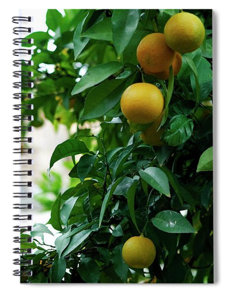 Spiral Notebook featuring the photograph Orange Tree by Lorraine Devon Wilke