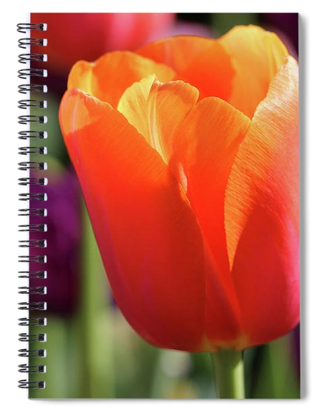 Orange Tulip In Franklin Park Spiral Notebook