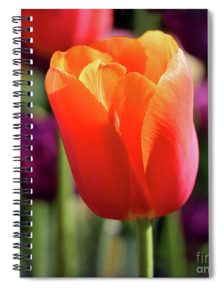 Orange Tulip Square Spiral Notebook
