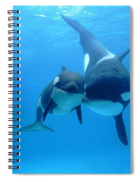 Orca Orcinus Orca Mother And Newborn Spiral Notebook