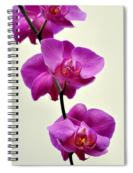 Orchid 26 Spiral Notebook