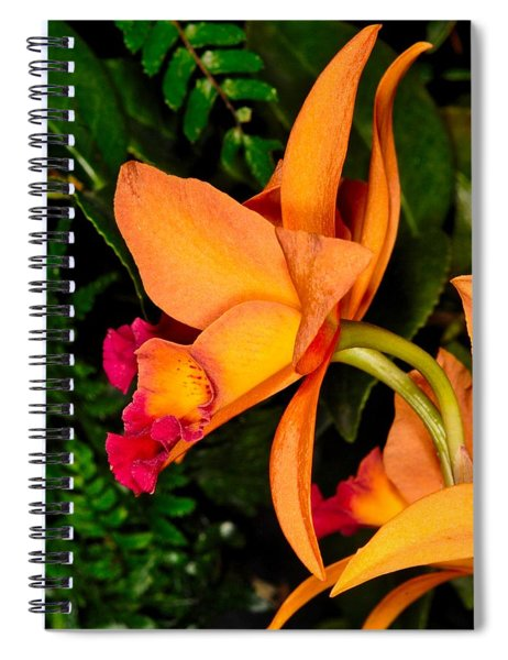 Orchid 355 Spiral Notebook