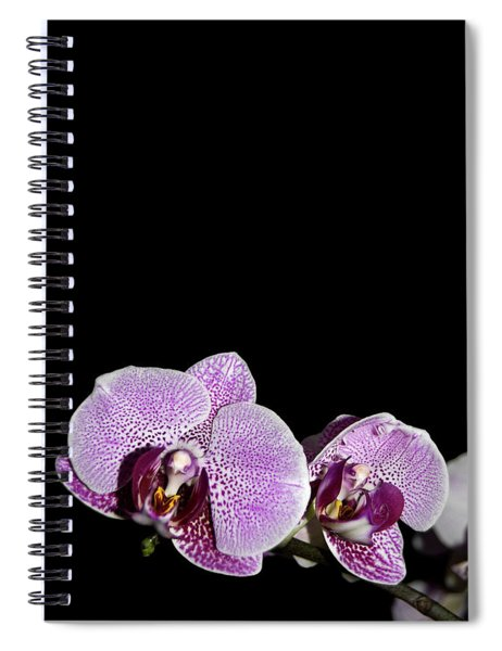Orchid Blooms Spiral Notebook