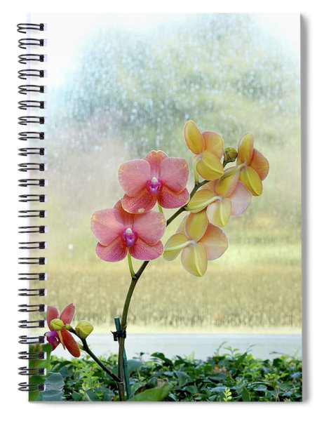 Orchid In Portrait Spiral Notebook