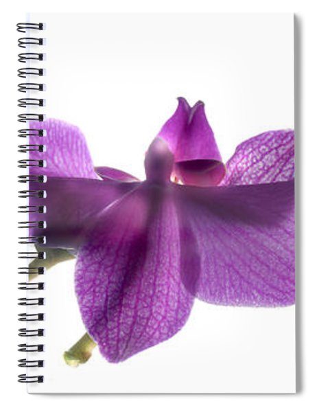 Orchid Row Spiral Notebook