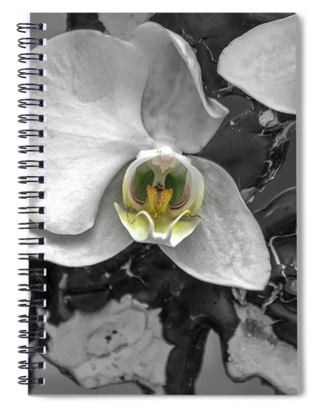 Orchids Elegant Delicate Beauties Spiral Notebook