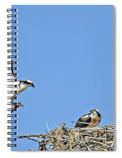 Osprey Brings Fish To Nest Spiral Notebook