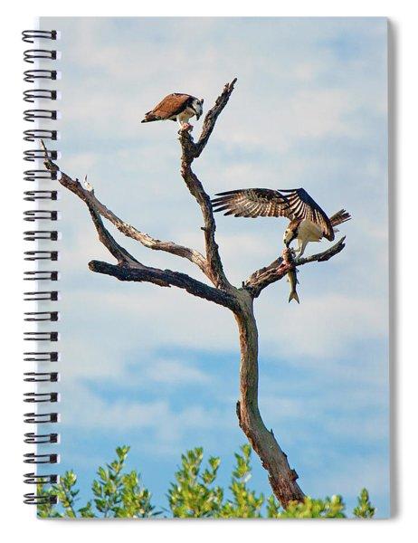 Osprey Feast Spiral Notebook