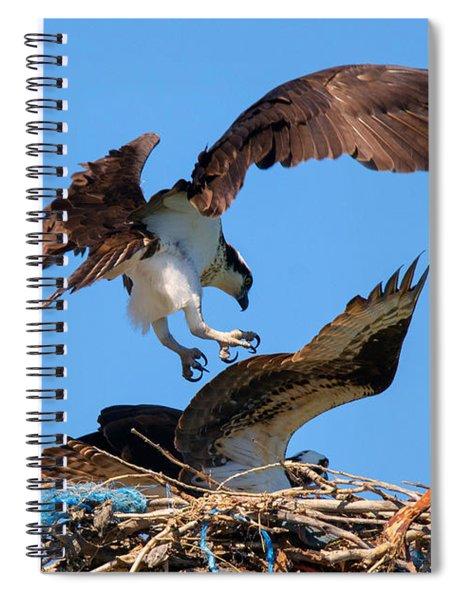 Osprey Mating Dance Spiral Notebook
