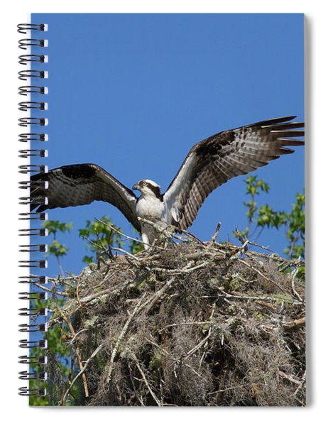 Osprey On Nest Wings Held High Spiral Notebook