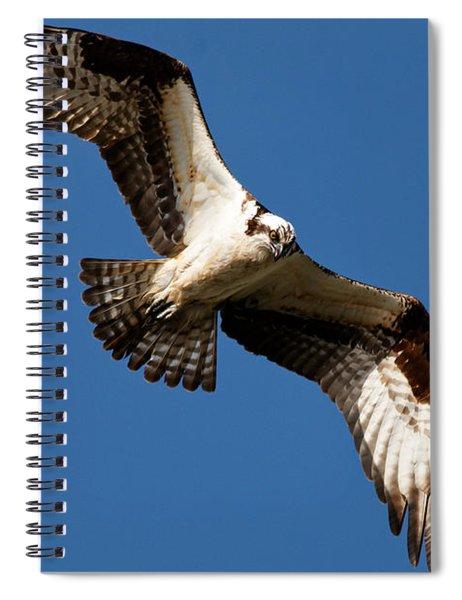 Osprey - Soaring Spiral Notebook