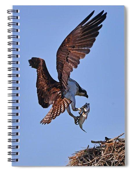 Osprey With Fresh Catch Spiral Notebook
