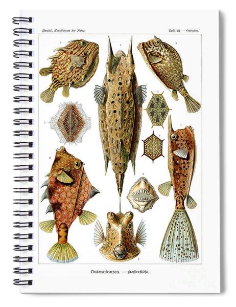 Ostraciontes Spiral Notebook