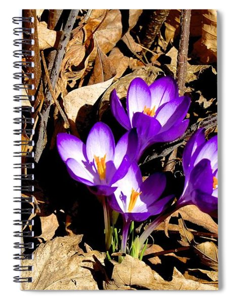Out Of The Shadows Spiral Notebook